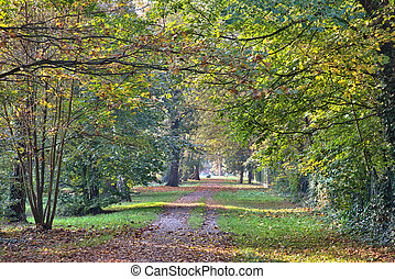 Beautiful beech canopy road