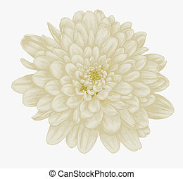 beautiful beige dahlia isolated on white. Hand-drawn with...