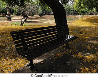 Beautiful bench in the park. Spring sunny day.