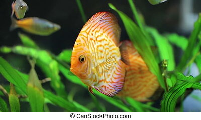 beautiful big fish floating