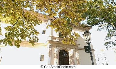 Beautiful big tree with autumn yellow leaves in front of the old villa, tree with yellow leaves on the background of an old building and a street lamp