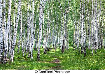 Beautiful birch forest in summer