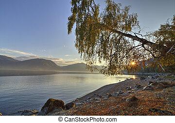 Beautiful birch on the bank of a mountain lake