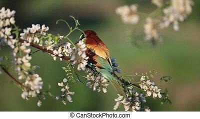 beautiful bird of paradise among white flowers , birds in ...