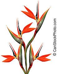 beautiful bird of paradise bouquet - bouquet of flowers bird...