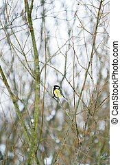 Beautiful bird on a tree branch in winter