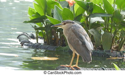 Beautiful bird sits on the lake shore. Close up.