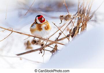beautiful bird sitting on a burdock among the snow