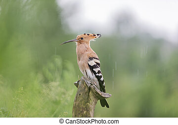 beautiful bird sitting on a stump in the rain