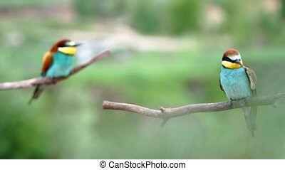 beautiful birds brush their feathers in the spring morning, bird life