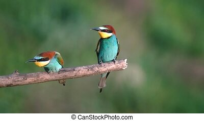 beautiful birds fly into the branch of slow motion , wild...