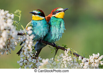 beautiful birds in spring on a flowering branch