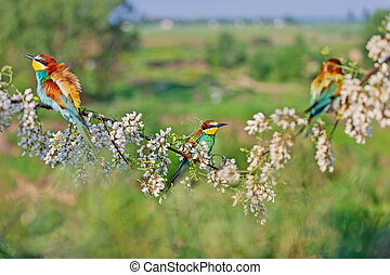 beautiful birds in spring sing on a flowering branch