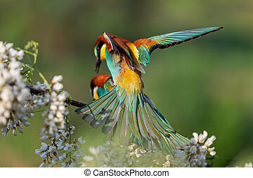 beautiful birds mate in spring on a flowering branch