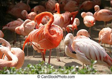 Beautiful Birds Preening in Peace