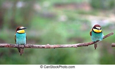 beautiful birds sit slowly swaying on a branch, bird life