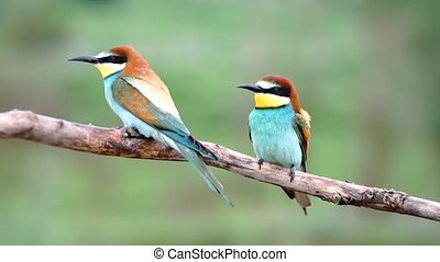 beautiful birds sitting on a branch and looking around, bird life