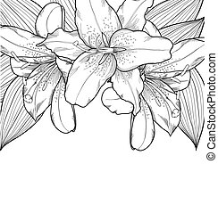 beautiful black-and-white background with lilies,...