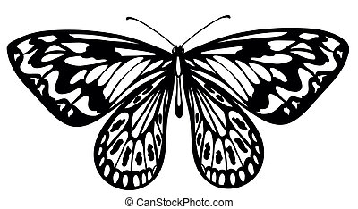 black and white butterfly isolated