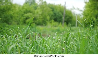 Beautiful black cat jumps out of an ambush in the grass.
