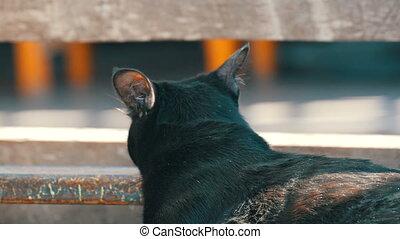 Beautiful black cat looking into distance - Beautiful black...