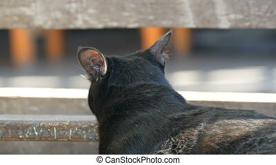 Beautiful black cat looking into distance - Beautiful black...