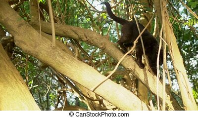 Beautiful black cat on a tree with creepers. - Beautiful...