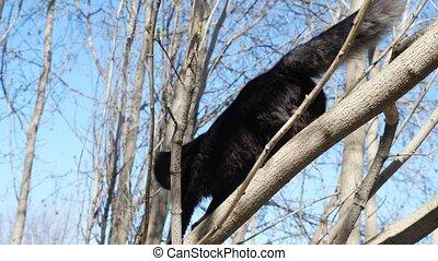 Beautiful black cat walks on a tree