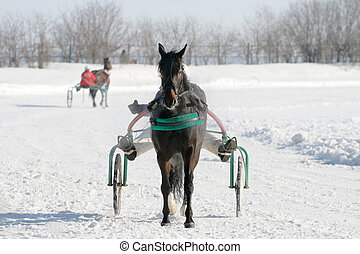 horse on a white snow