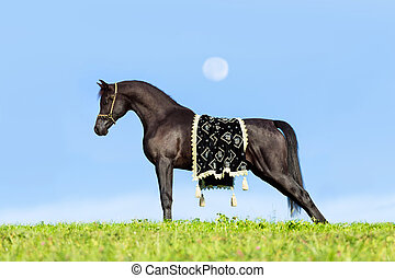 Beautiful black horse on sky