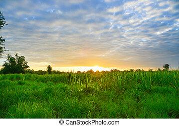 Beautiful blazing sunset landscape