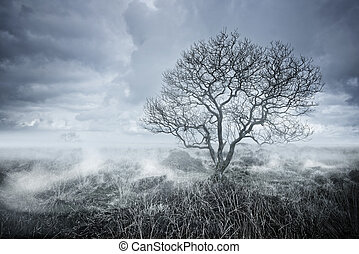 Beautiful landscapes. A lone Tree rises from the fog.