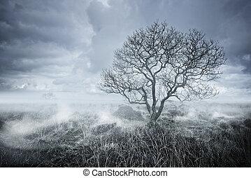 Beautiful Bleakness - Beautiful landscapes. A lone Tree...