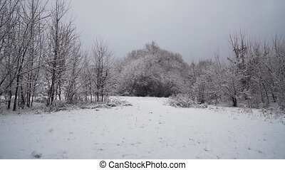 Beautiful Blizzard Christmas Nature Tree In Winter Landscape