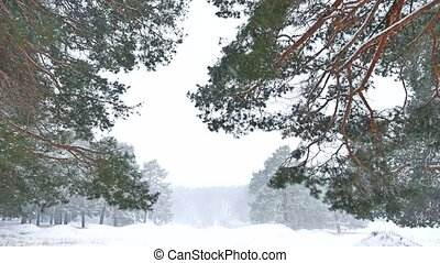 Beautiful blizzard christmas tree in winter landscape nature in late evening in snowfall landscape