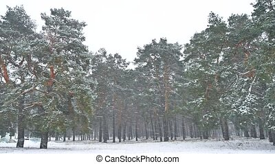 Beautiful blizzard nature christmas tree in winter landscape in late evening in snowfall landscape