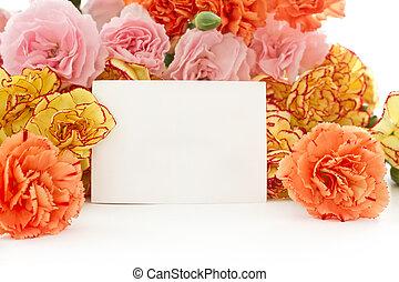 carnation flowers - beautiful blooming carnation flowers on...