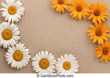 Beautiful blooming daisies on the sand, with a place for your text. View from above.