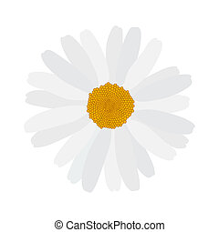 Beautiful blooming daisy on whit background. Illustration.