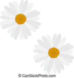 Beautiful blooming daisy on whit background. Seamless ...