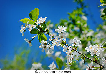 Beautiful blooming spring garden on a background of blue sky