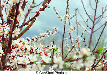 beautiful blooming tree at spring on blue sky background