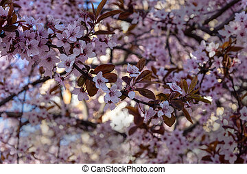 Beautiful blooming trees with small lilac flowers. Shallow depth of field.