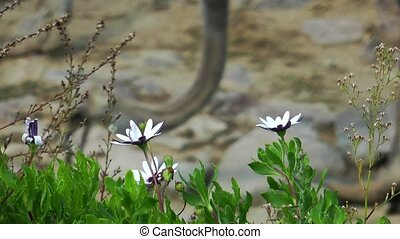 Beautiful Blossom Flora Flowers in Mother Nature