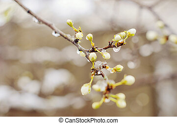 Beautiful blossoming branches of trees