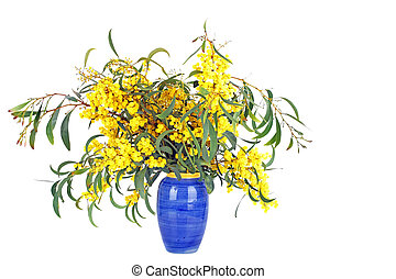 Beautiful blossoming mimosa in a blue vase