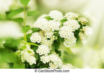 beautiful blossoming tree