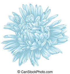 Beautiful blue aster isolated on white background .