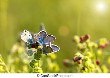 beautiful blue butterflies sitting on the grass on a Sunny day