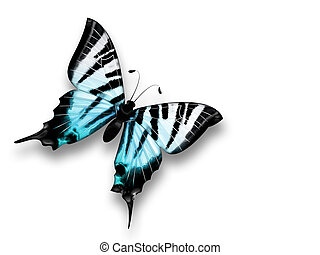 beautiful blue butterfly on a white background
